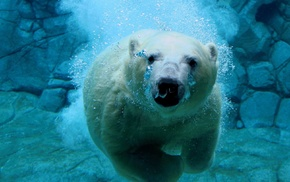 nature, water, polar bears, sea, animals, bears