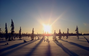 snow, forest, Sun, winter, light