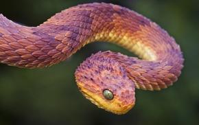 animals, snake