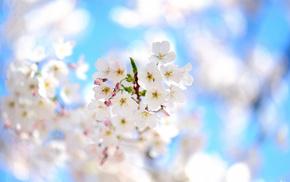 bloom, tree, branch, flowers, spring