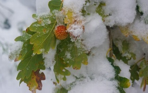snow, winter, leaves