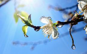 цветок, весна, дерево, ветка, капли, Небо