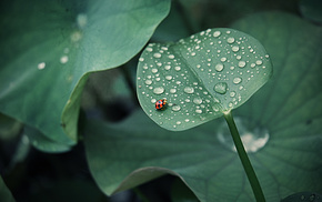 nature, drops, dew, leaves