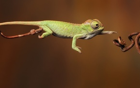 reptile, chameleons, jumping