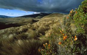 hills, mountain, flowers, landscape, sky