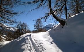 деревья, лыжня, свет.снег, зима