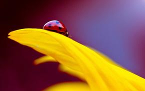 yellow, petal, macro, flower