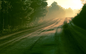 nature, Sun, morning, road, forest