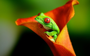 frog, animals, flower, nature