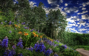 nature, forest, flowers, grass, bushes