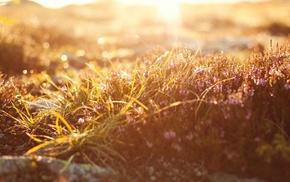 grass, flowers, depth of field, bokeh, sunlight, nature