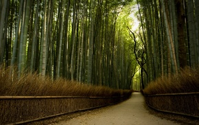 path, nature, trees, bamboo, dirt road, forest