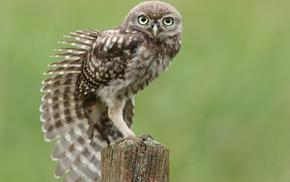owl, feathers, bird, animals, sitting