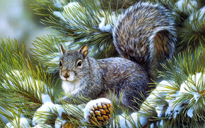 squirrel, animals, fir-tree