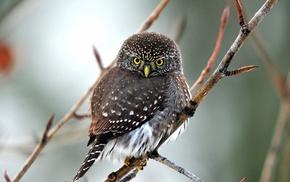 animals, birds, twigs, owl
