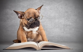 book, animals, dog, glasses