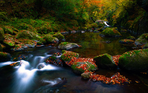 stones, forest, autumn, foliage, river