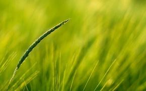 plants, nature, closeup