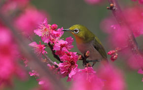 bird, flowers, tree, spring, bloom