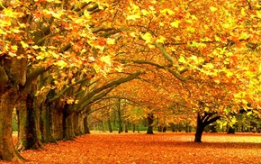 fall, nature, yellow, trees, leaves, seasons