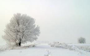 деревья, снег, туман, природа, Зима