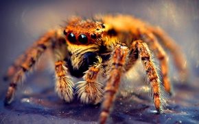 animals, nature, macro, spider