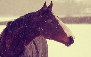 background, snow, wallpaper, horse, muzzle