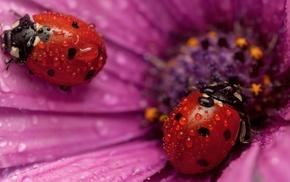 stunner, petals, flower, drops