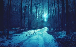 path, dirt road, nature, forest, trees, snow