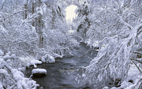 winter, trees, forest, river, snow