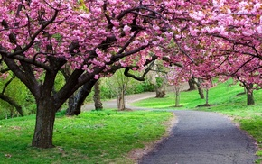 spring, park, nature, pink, flowers