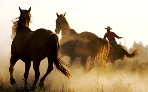 western, cowboys, horse, animals