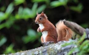 sit, squirrel, animals