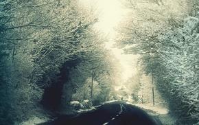 дорога, деревья, снег