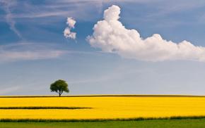 clouds, field, tree, sky, summer