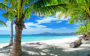 palm, coast, sea, nature, sand