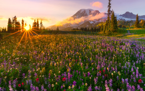 glade, nature, rays, evening, flowers