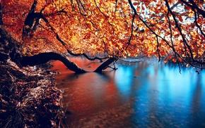листья, деревья