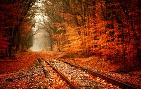 лес, железная дорога