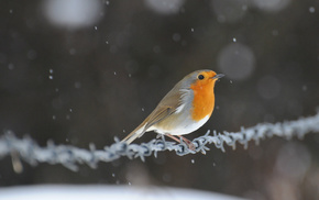snow, bird, highlights, animals