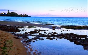 берег, птицы ., Море, пейзаж, природа