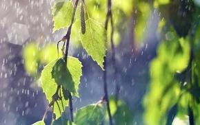twigs, nature, leaves, rain