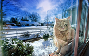 winter, light, animals, window