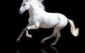 horse, black, animals, background
