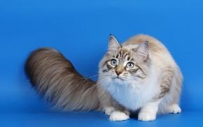 tail, cat, animals, eyes