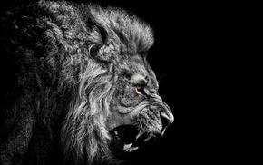 фотография, лев, животные, произведение искусства, черный