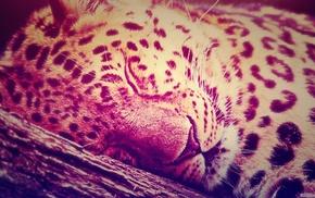 gradient, animals, leopard