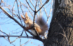 spring, animals, tree, sky, squirrel