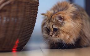 basket, animals
