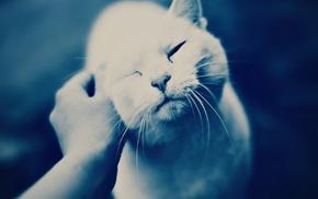 hand, cat, animals